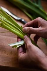 layers of sliced green garlic
